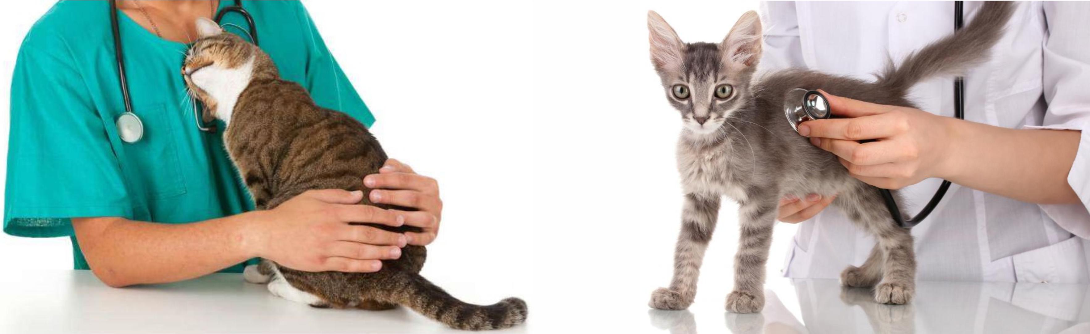 Квалифицированная ветеринарная помощь