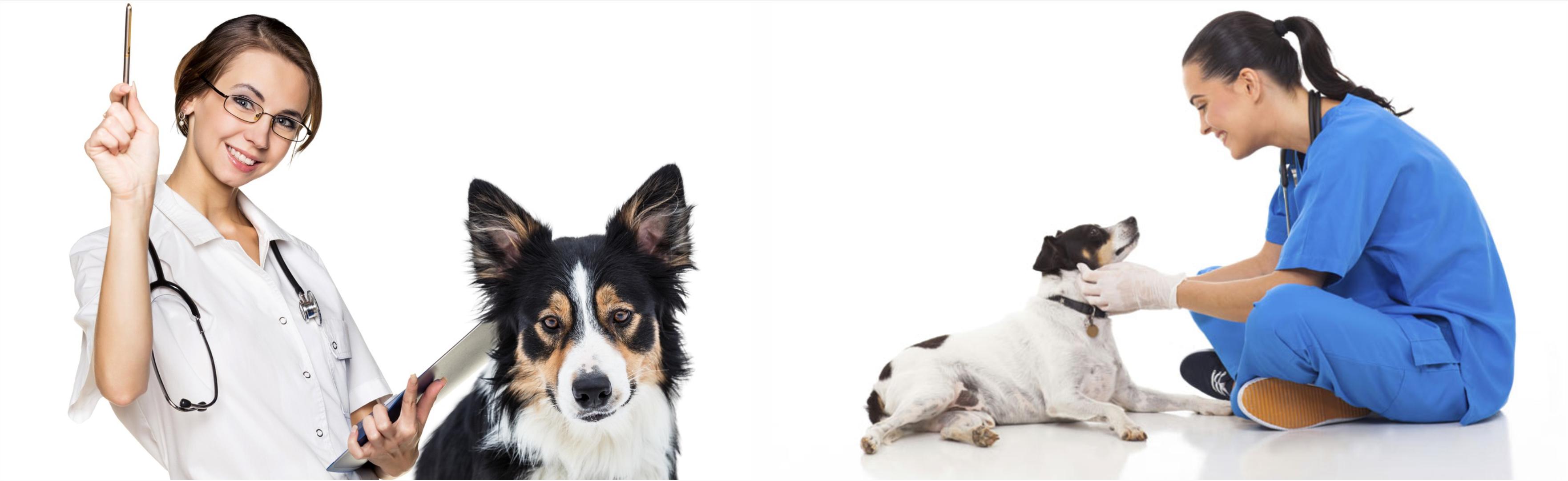 Опытные ветеринары